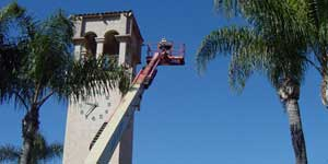 Bee Removal Culver City CA Difficult bee removal using a 