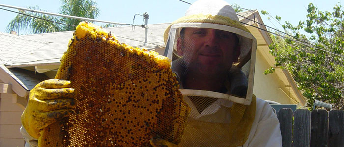 Culver City Bee Removal Guys Tech Michael